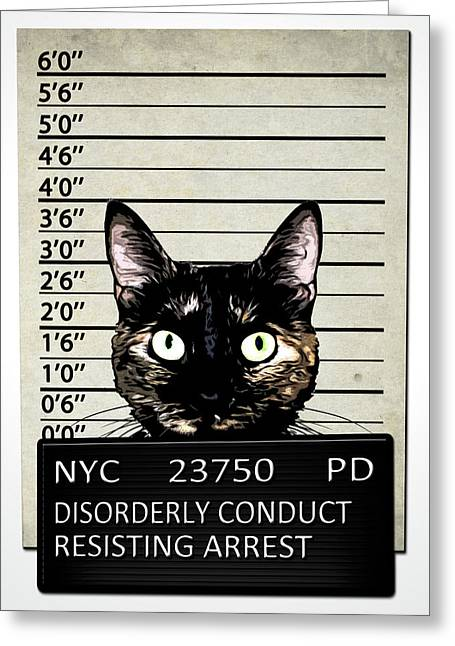Pet Greeting Cards - Kitty Mugshot Greeting Card by Nicklas Gustafsson