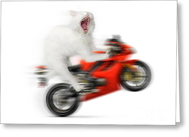 Digital Altered Greeting Cards - Kitty on a Motorcycle Doing a Wheelie Greeting Card by Oleksiy Maksymenko