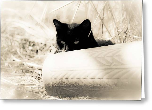 Cat Prints Photographs Greeting Cards - Kitty Stalks in Sepia Greeting Card by Lori Coleman