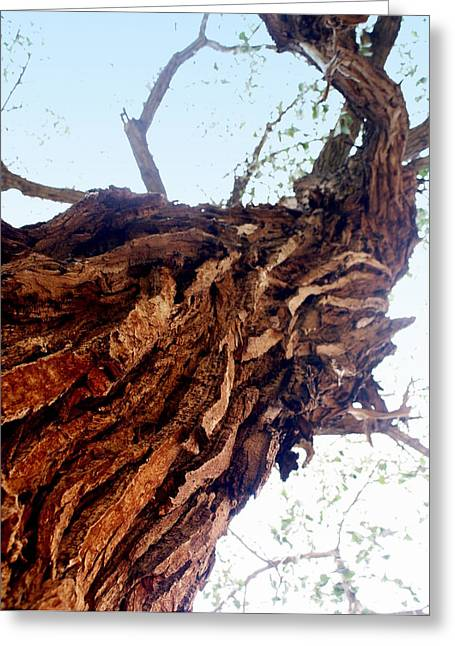 knarly Tree Greeting Card by Marty Koch