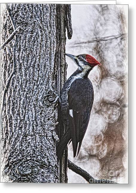 Pileated Woodpecker Greeting Cards - Knock Knock Greeting Card by Lois Bryan