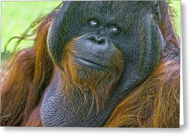 Orang Utans Greeting Cards - Knowing Smile Greeting Card by Heiko Koehrer-Wagner