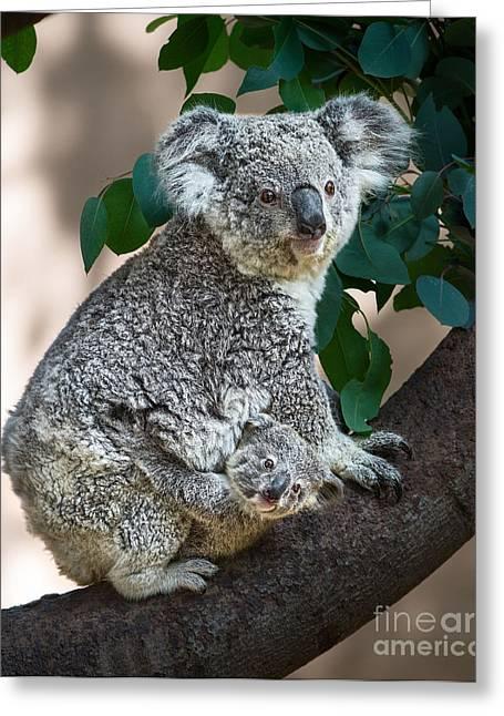 Koala Joey And Mom Greeting Card by Jamie Pham