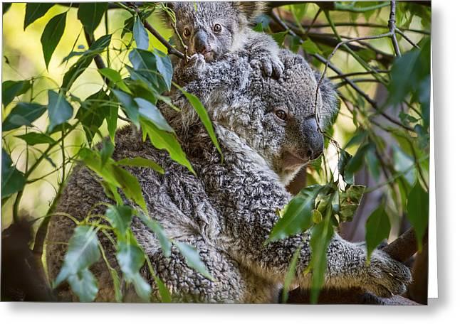 Koala Joey Greeting Card by Jamie Pham