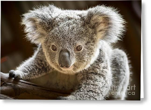 Koala Kid Greeting Card by Jamie Pham