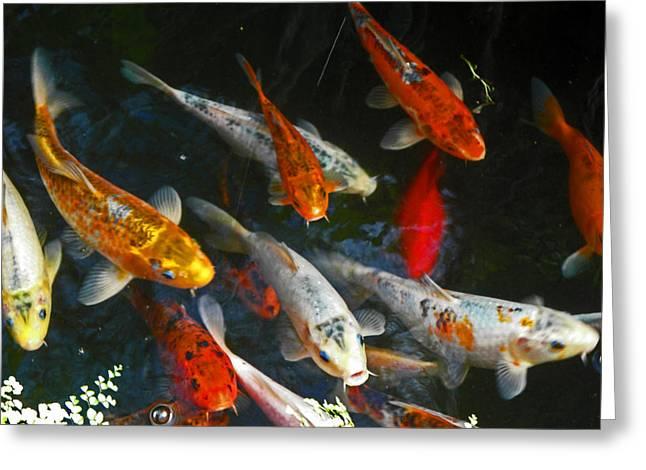 Gold Fish Greeting Cards - Koi Fish III Greeting Card by Elizabeth Hoskinson