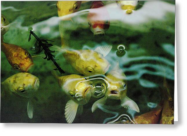 KOI  Greeting Card by Jeff  Swan