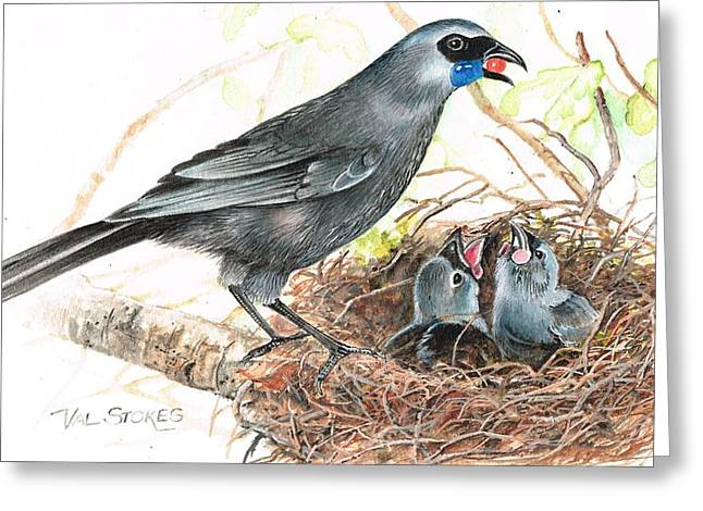 Kokako Feeding Chicks Greeting Card by Val Stokes