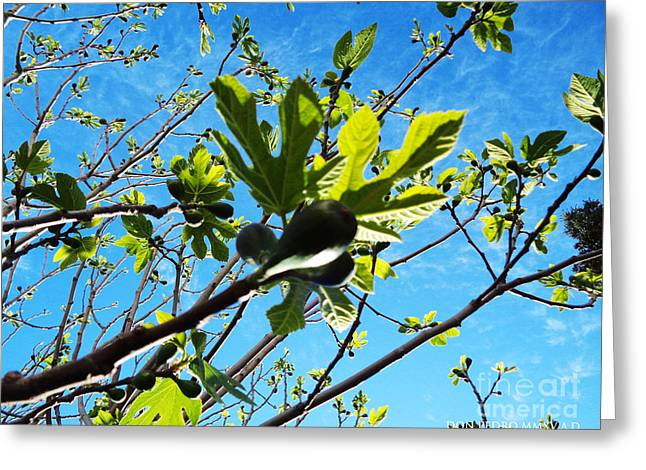 Figtree Greeting Cards - Kreativity Im HojaH Greeting Card by Don Pedro De Gracia