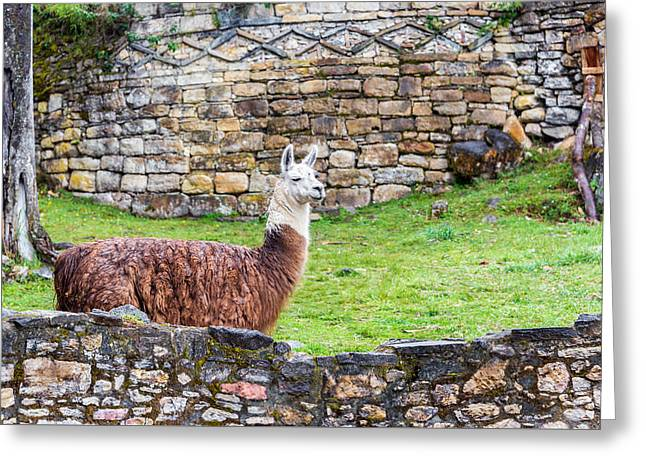 Civilization Greeting Cards - Kuelap Ruins and Llama Greeting Card by Jess Kraft
