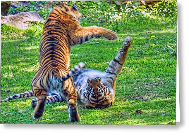 The Tiger Greeting Cards - Kung Fu Tigers Greeting Card by Nadia Sanowar