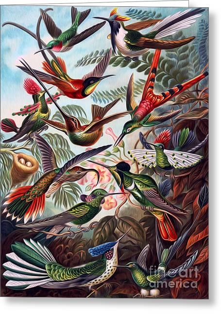 Kunstformen Der Natur Greeting Cards - Kunstformen Der Natur Hummingbird Trochilidae Interpreted Greeting Card by Pablo Avanzini