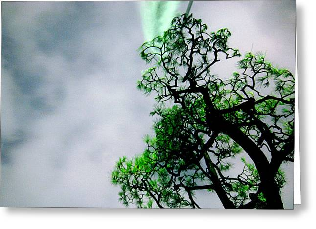 Kyoto Greeting Cards - Kyoto Tree Greeting Card by Mike Lindwasser Photography