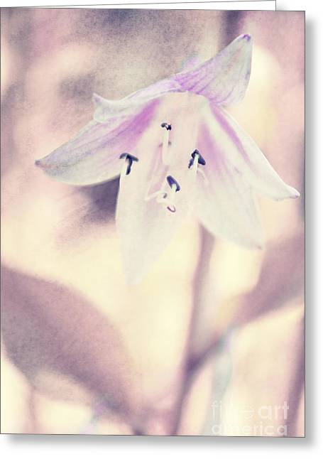 Tenderly Greeting Cards - La belleza Greeting Card by Angela Doelling AD DESIGN Photo and PhotoArt