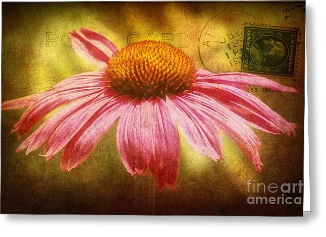 Abstracted Coneflowers Greeting Cards - La fleur Greeting Card by Angela Doelling AD DESIGN Photo and PhotoArt