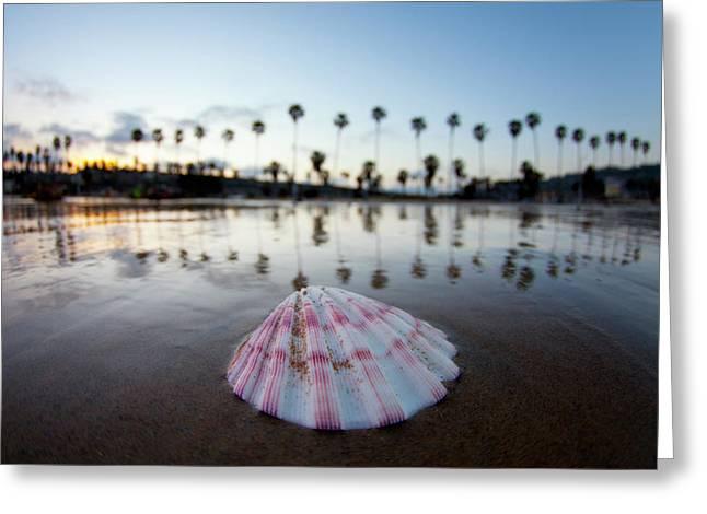 La Jolla Shore Shell Greeting Card by Sean Davey
