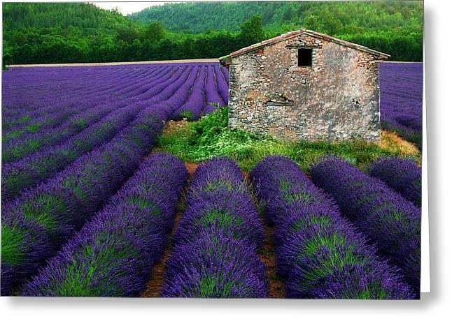 Lavender Fields Greeting Cards - La Lavande Greeting Card by John Galbo