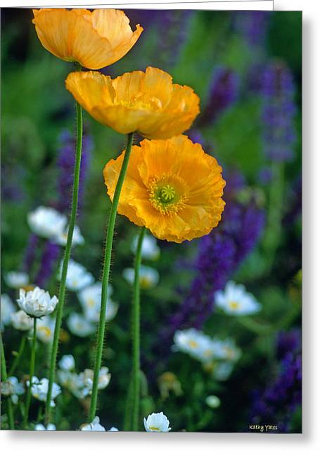 Yellow Flowers Framed Prints Greeting Cards - La Playa Poppies Greeting Card by Kathy Yates