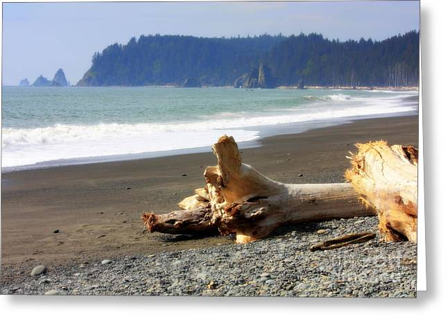 La Push Beach  Greeting Card by Carol Groenen