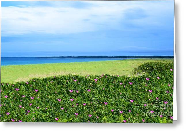 Ocean Art Photography Greeting Cards - La Rosa Greeting Card by Photographs by Joules