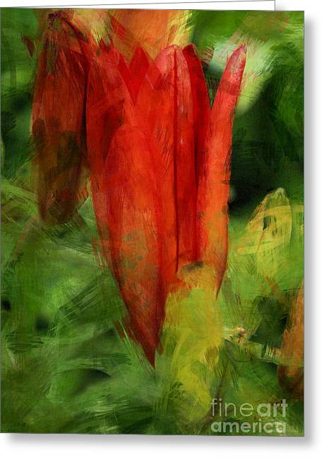 Daubs Greeting Cards - La Tulipe Rouge Greeting Card by Aimelle