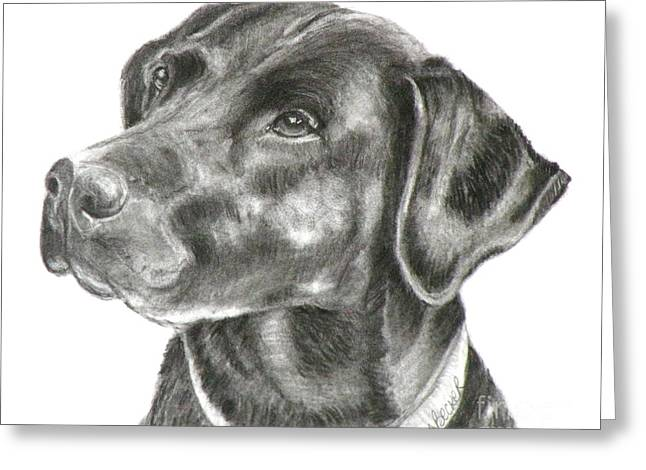 Lab Drawings Greeting Cards - Lab Charcoal Drawing Greeting Card by Susan A Becker