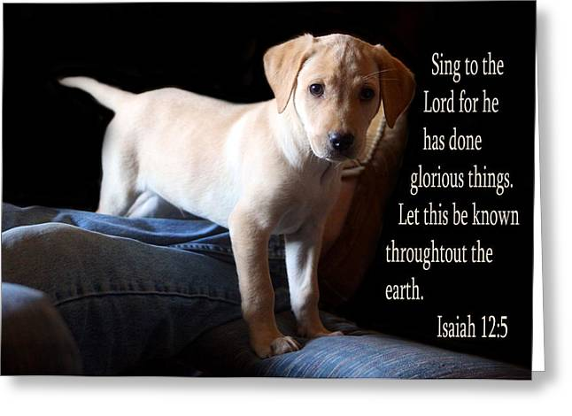 Isaiah Greeting Cards - Labadore Puppy Is. 12v5 Greeting Card by Linda Phelps