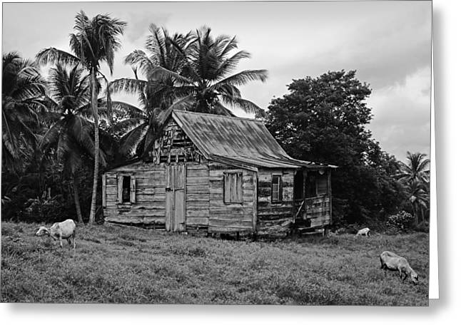 White Frame House Greeting Cards - Laborie House- St Lucia Greeting Card by Chester Williams