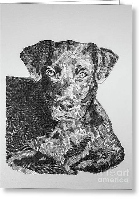 Labrador Portrait Greeting Card by Robert Yaeger