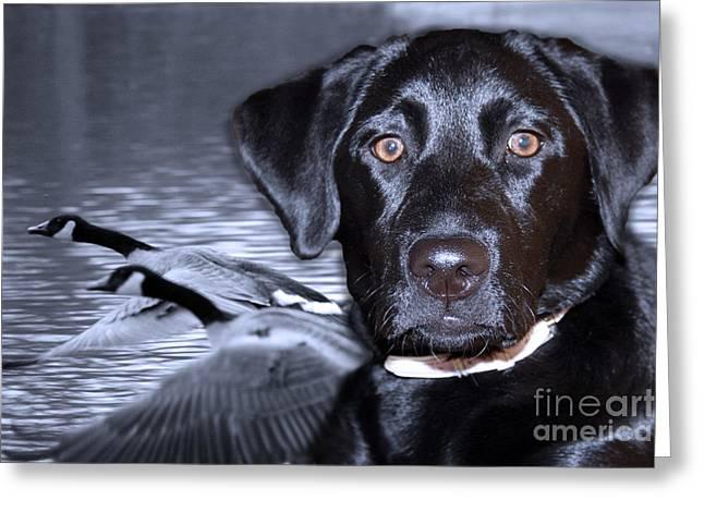 Labrador Retriever Digital Art Greeting Cards - Labrador Retriever Thoughts  Greeting Card by Cathy  Beharriell
