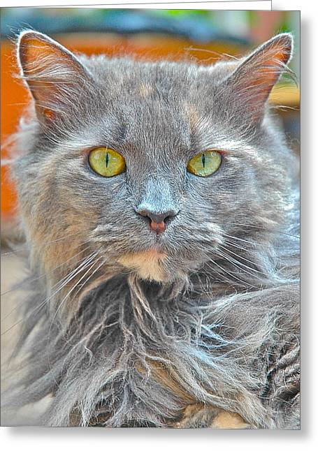 Gray Hair Greeting Cards - Lacey Greeting Card by Danielle Sigmon