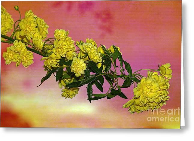 Lady Banks Roses At Sunset By Kaye Menner Greeting Card by Kaye Menner