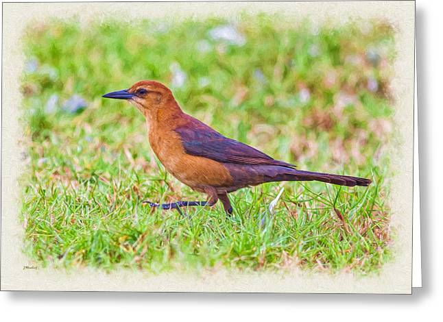 Zoology Greeting Cards - Lady Grackle 1 Greeting Card by John Bailey