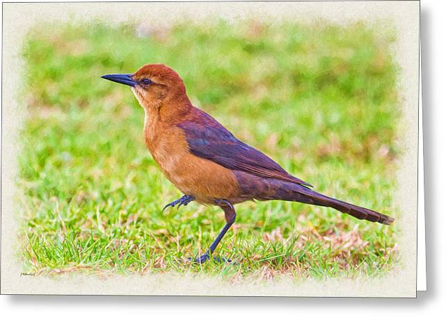 Zoology Greeting Cards - Lady Grackle 3 Greeting Card by John Bailey