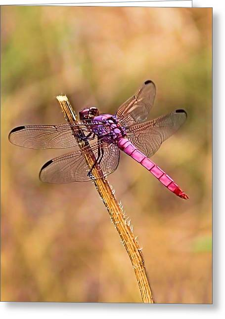 Dragonflies Greeting Cards - Lady in Pink Greeting Card by Elizabeth Budd