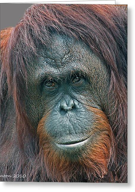 Ape Photographs Greeting Cards - Lady Of The Forest Greeting Card by Larry Linton