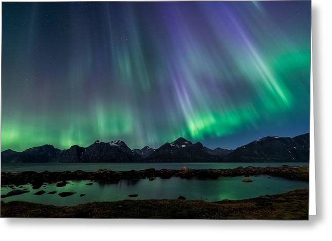 Arctic Greeting Cards - Lady of the night Greeting Card by Tor-Ivar Naess