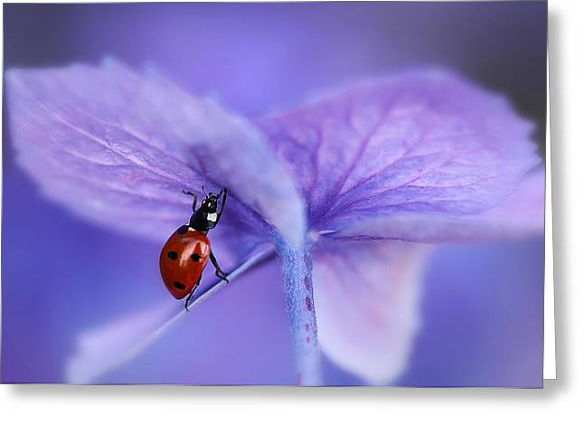 Ladybird Greeting Cards - Ladybird On Purple Hydrangea Greeting Card by Ellen Van Deelen