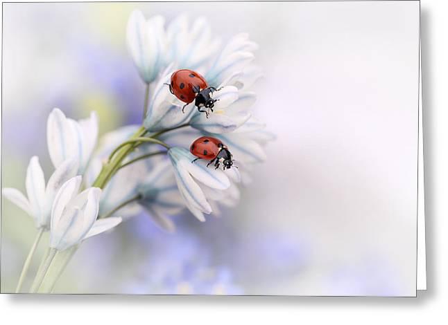 Macro Greeting Cards - Ladybirds Greeting Card by Ellen Van Deelen