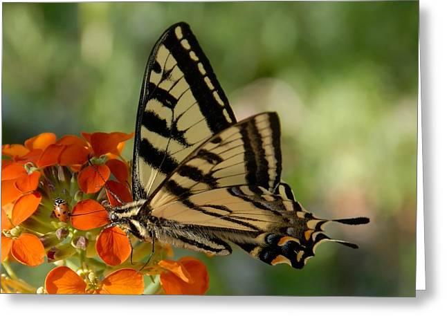 Sandias Greeting Cards - Ladybug and Tigertail Greeting Card by David Lee Thompson