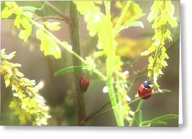 Ladybug Ladybug Greeting Card by Toni Hopper