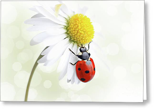 Critter Greeting Cards - Ladybug on daisy flower Greeting Card by Pics For Merch