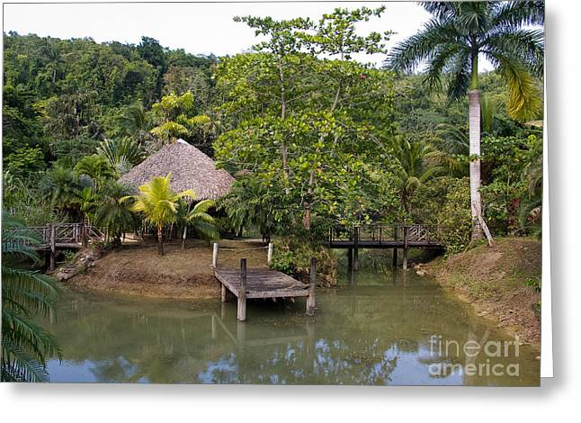 Sheds Greeting Cards - Lagoon and Dock White River Valley Jamaica Greeting Card by Jason O Watson