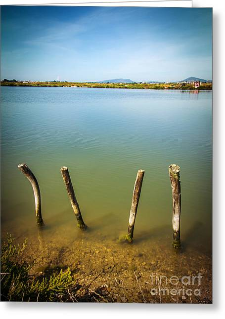 Park Scene Photographs Greeting Cards - Lake and Poles Greeting Card by Carlos Caetano