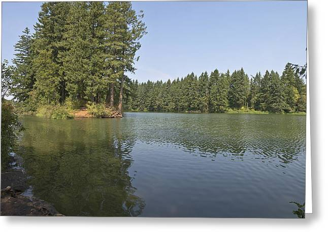 Tree Roots Greeting Cards - Lake and surrounding wilderness. Greeting Card by Gino Rigucci