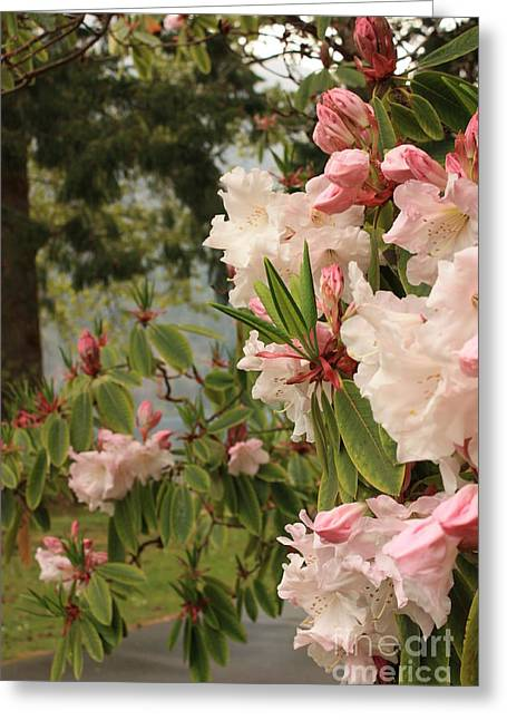 Lake Crescent Greeting Cards - Lake Crescent Lodge Rhododendrons Greeting Card by Carol Groenen