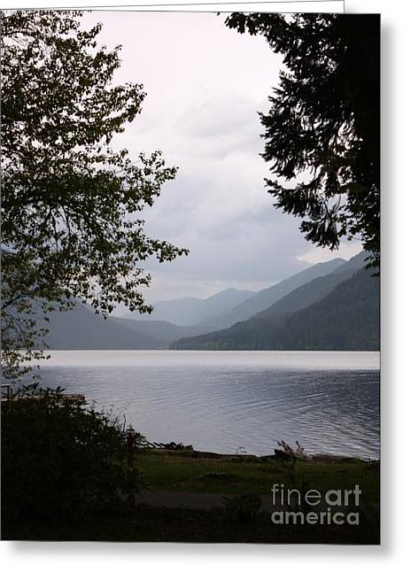 Lake Crescent Greeting Cards - Lake Crescent through the Trees Greeting Card by Carol Groenen