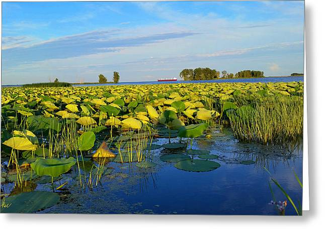 Beautiful Creek Greeting Cards - Lake Erie Marsh Greeting Card by Michael Rucker