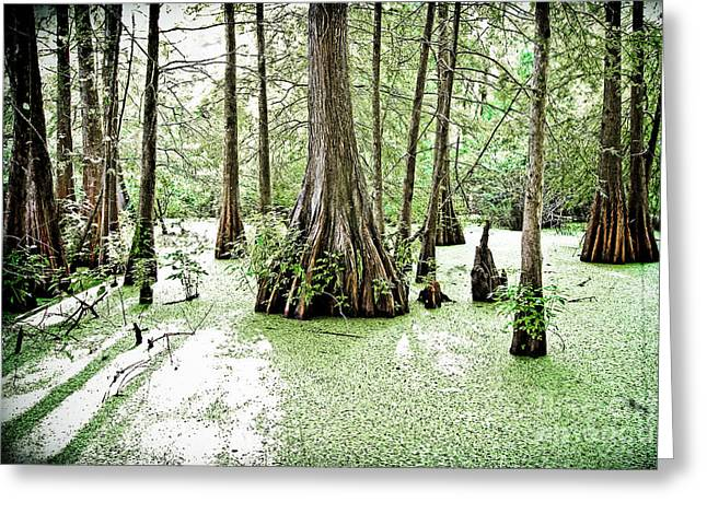 Martinville Greeting Cards - Lake Martin Swamp Greeting Card by Scott Pellegrin