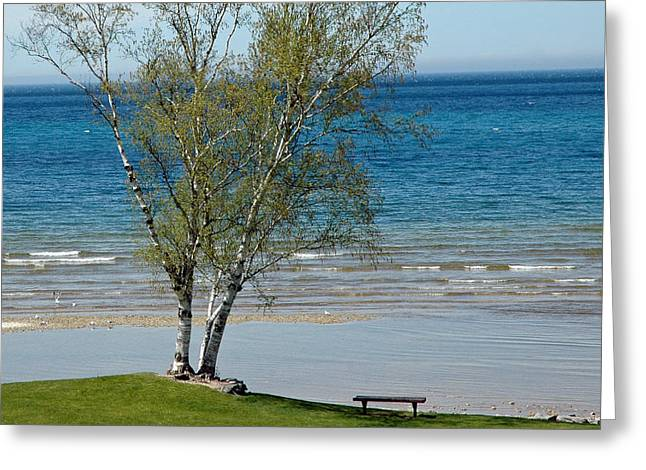 Vacation Greeting Cards - Lake Michigan Birch Tree Bench Greeting Card by LeeAnn McLaneGoetz McLaneGoetzStudioLLCcom